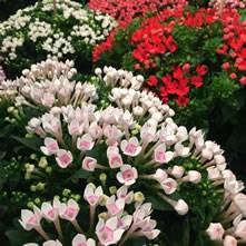 Wholesale Flowers Amp Florist Supplies Uk Online Fresh Dutch Flower Delivery