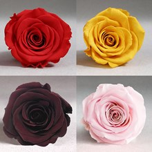 'Luxury One Year' Preserved Roses