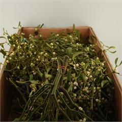 Wholesale Mistletoe Wedding Flower Guides Uk Triangle Nursery