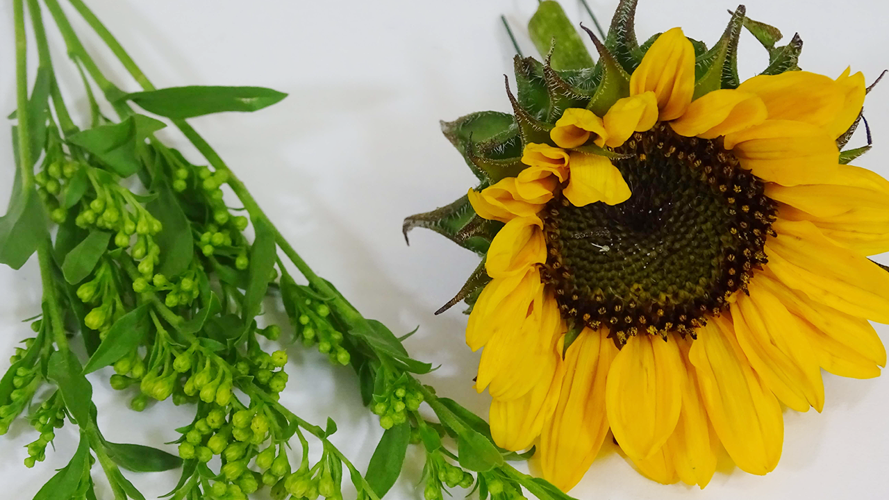 Collect the ingredients, including the flowers and florist accessories to begin creating the buttonhole. To begin cut the solidago into smaller pieces, using no more than 1/2 a stem. Next, cut down the sunflower sonja and support with a stub wire.