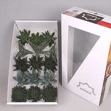 ALOE MIX WINCX BOX 10CM