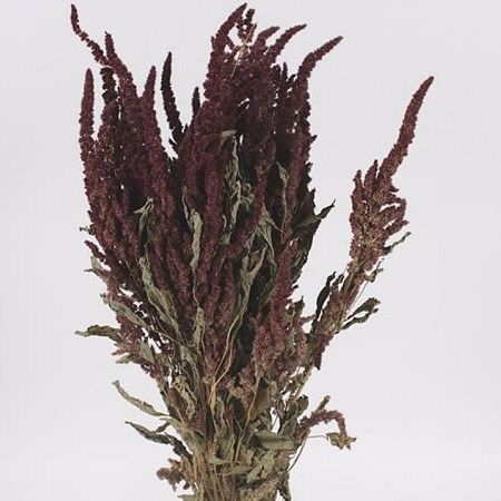 AMARANTHUS RED (DRIED)