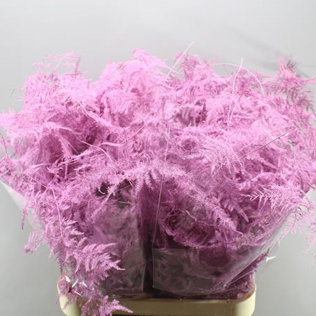 ASPARAGUS FERN DYED LIGHT PINK