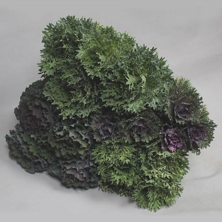 BRASSICA FRILLY MIX (VARIETIES MAY VARY)