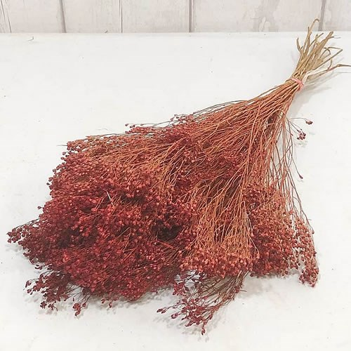 Broom Dyed Red (Dried)
