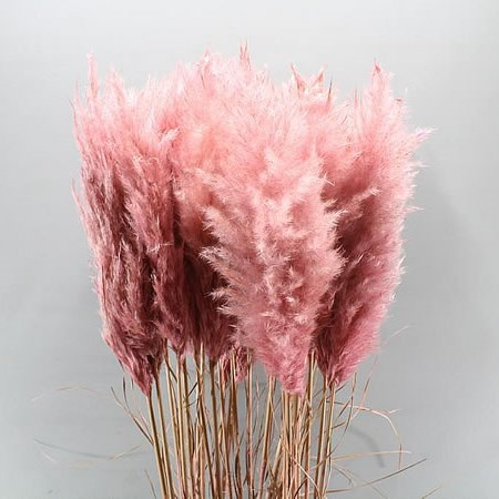 CORTADERIA DYED LIGHT PINK (PAMPAS GRASS)