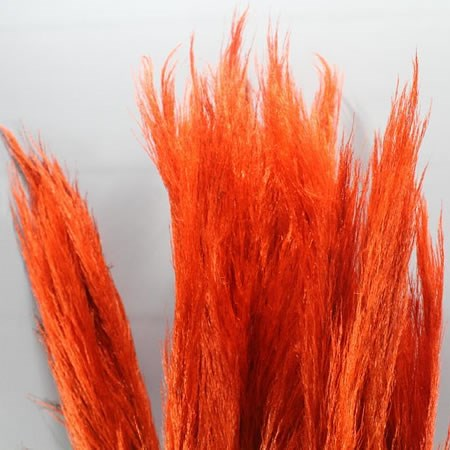 CORTADERIA DYED RED (PAMPAS GRASS)