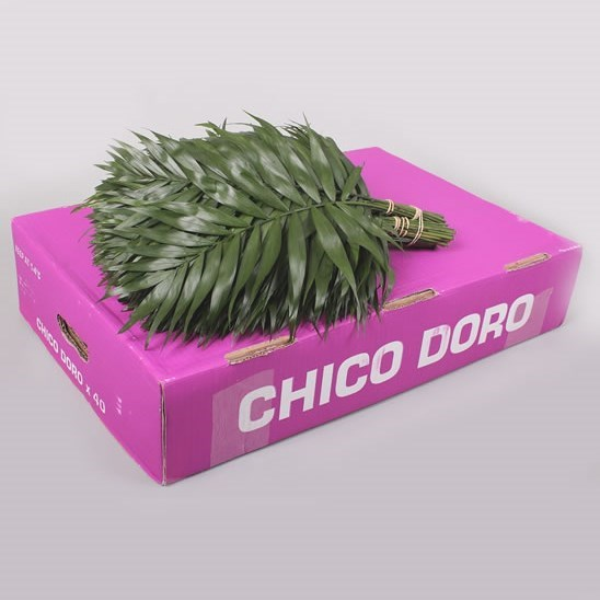 Chico Palm Doro