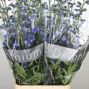 DELPHINIUM BLUE POWER