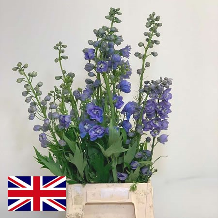 Delphinium Tops Mixed (English)