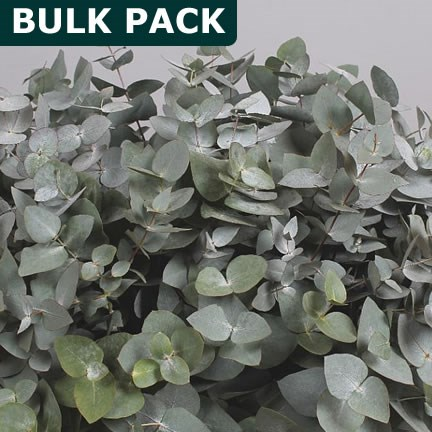EUCALYPTUS CINEREA - BULK PACKS