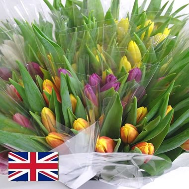 Tulip Mix - English