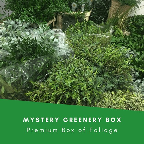 Mystery Greenery Boxes (Inc VAT)