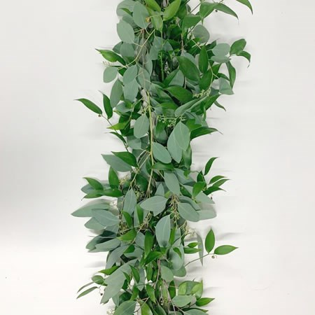 Soft Ruscus & Euc. Populus in Berry Garlands