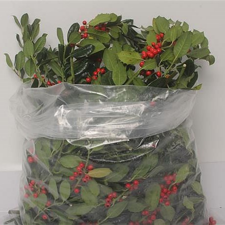 HOLLY + RED BERRIES 3KG
