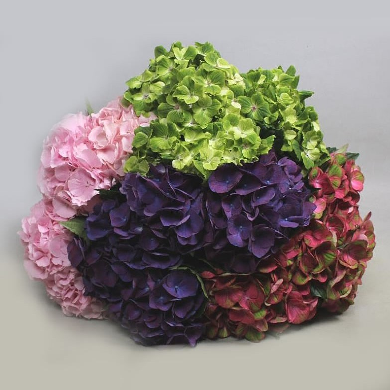 HYDRANGEA MIX (COLS MAY VARY)