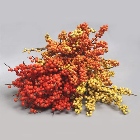 ILEX AUTUMN MIX