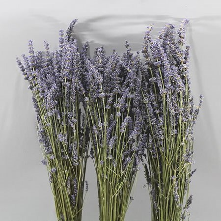 LAVENDER (DRIED)