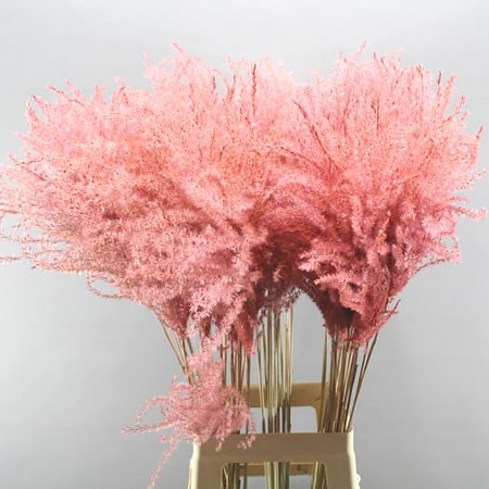 MISCANTHUS GRASS DYED LIGHT PINK (DRIED)