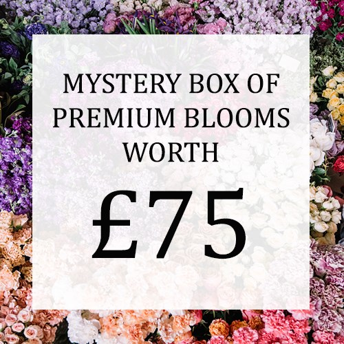 Mystery Flower Box £75 (incl. VAT)