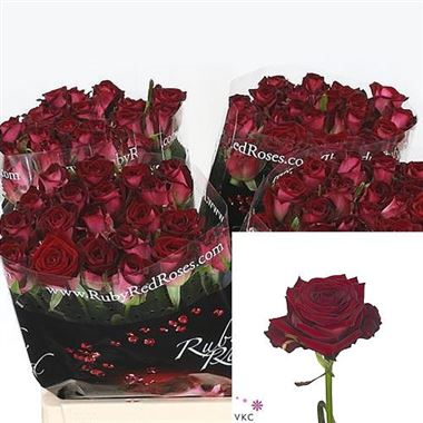 Rose f ruby red