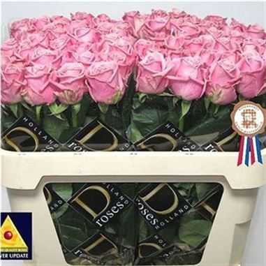 Rose Heaven 40cm (Small Headed)