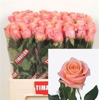 Rose Lady Margaret 50cm Wholesale Dutch Flowers