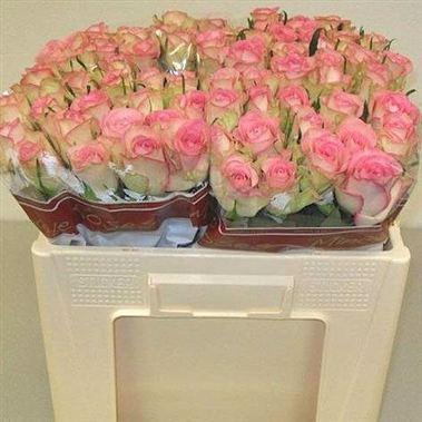 Rose Lovely Jewel 50cm Wholesale Flowers Florist Supplies Uk