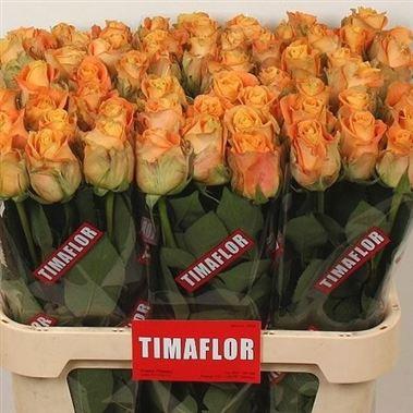 morning sun 80cm wholesale flowers florist supplies uk