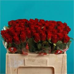 Rose Red Ribbon 50cm Vdd Wholesale Flowers Florist Supplies Uk