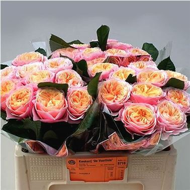 Rose Vuvuzela 40cm Wholesale Flowers Florist Supplies Uk