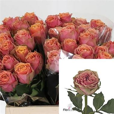 Fresh Pink Rose Flowers Rose Wild Look 50cm | ...