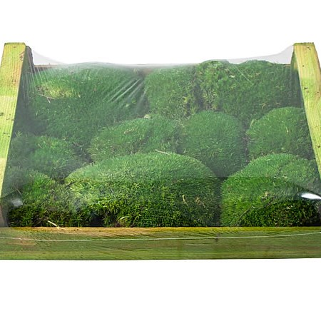 CUSHION MOSS PRESERVED GREEN