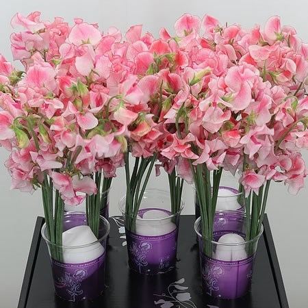 SWEET PEAS WEDDING PINK