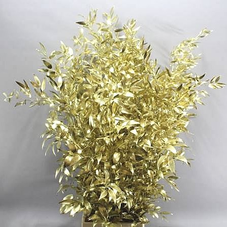 Soft Ruscus Preserved Gold