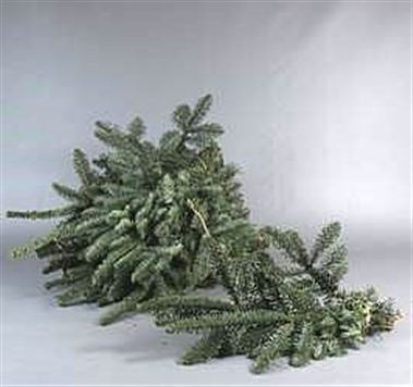 Spruce -  Mini Hand Bunches