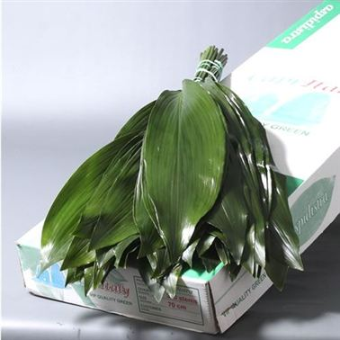 Aspidistra Leaves Super (italian - approx. 50 stems)