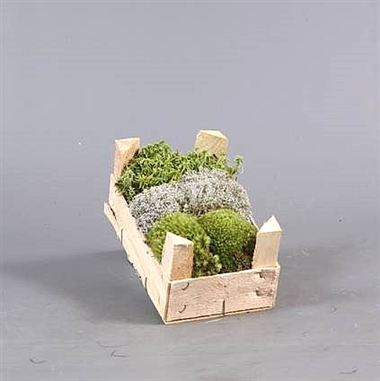Mini Moss mix (wooden crate)