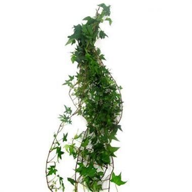 Ivy Trails Green 70cm