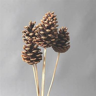 Natural Pine Cone Picks x 50