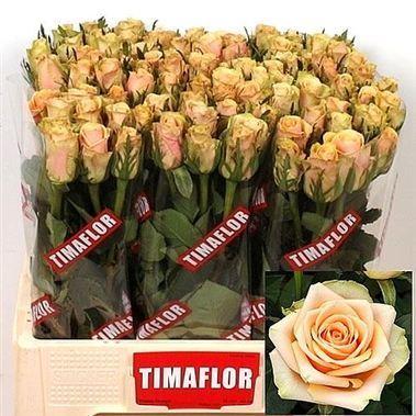 Rose Alchemy 50cm Wholesale Dutch Flowers Amp Florist Supplies Uk