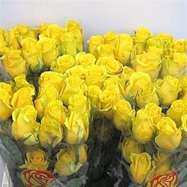 Rose high exotic 40cm wholesale flowers florist supplies uk rose high exotic mightylinksfo