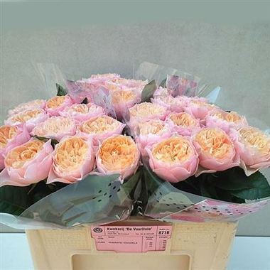 Rose Romantic Vuvuzela 55cm Wholesale Flowers Florist Supplies Uk