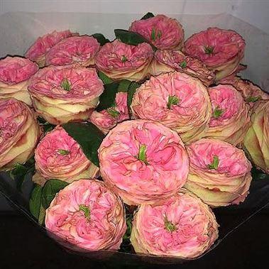 Rose turkish delight 50cm wholesale flowers florist for Divan rose turkish delight