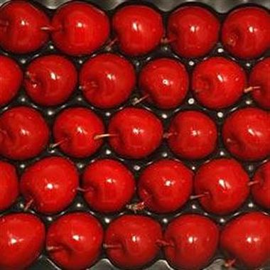 Waxed Apples - Xmas Red