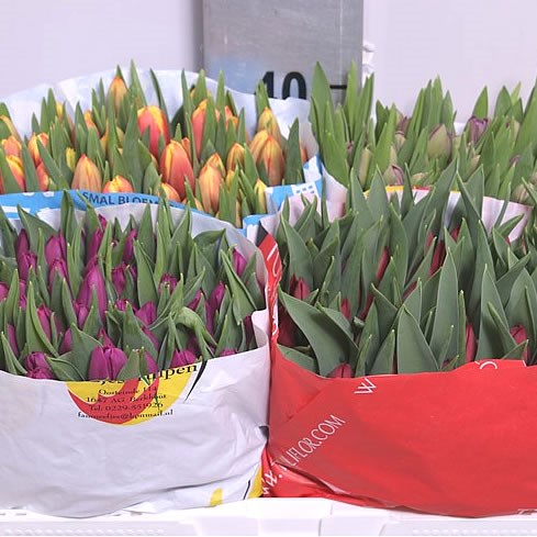 Weekly Special - 4 Col Tulip Mix (Cols may vary)