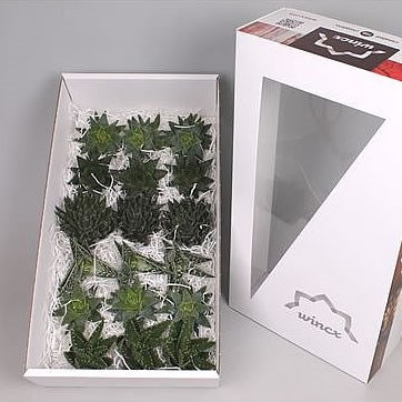 ALOE MIX WINCX BOX 9CM