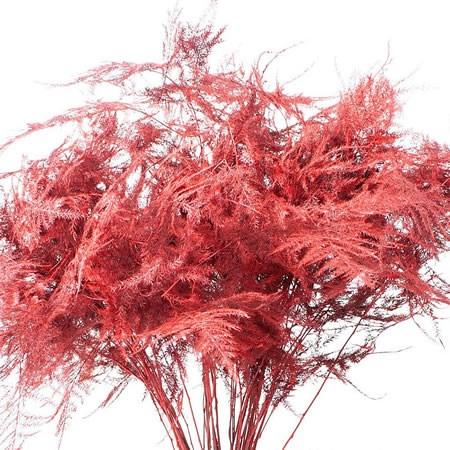 ASPARAGUS FERN DYED RED