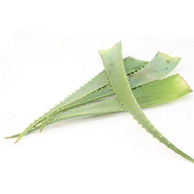 wholesale monstera wedding flower guides uk triangle nursery. Black Bedroom Furniture Sets. Home Design Ideas