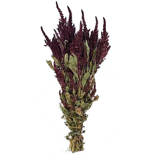 Amaranthus Red - Dried
